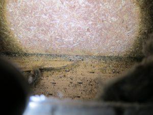 Schimmel im Neubau - Stachybotrys auf Holz